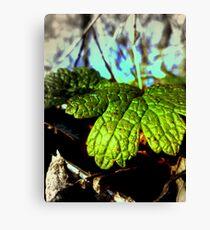 Deep Green Canvas Print