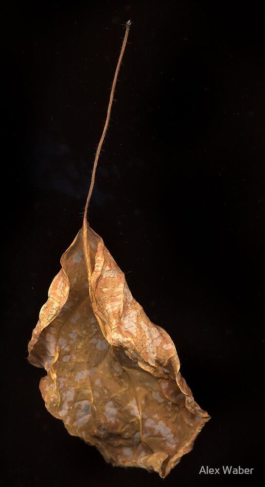 Leaf by Alex by Alex Waber