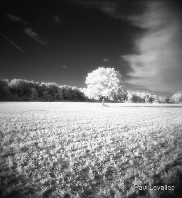 Holga Infrared Tree #7 by Paul Lavallee