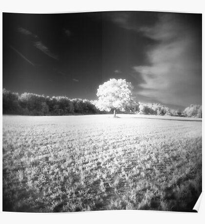 Holga Infrared Tree #7 Poster