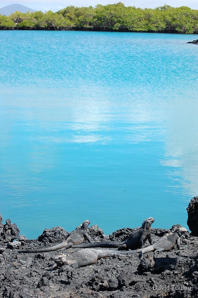 The Galapagos Scene by David Towey