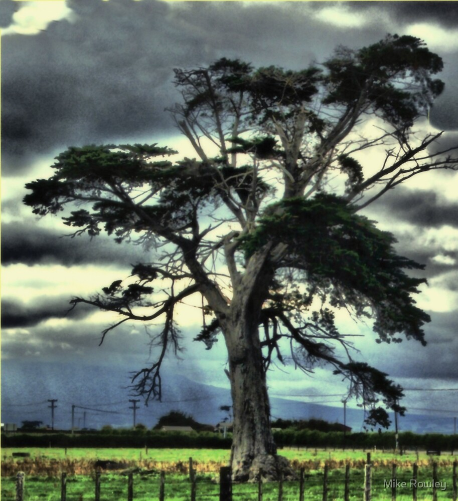My Lonley Tree #2 by Mike Rowley