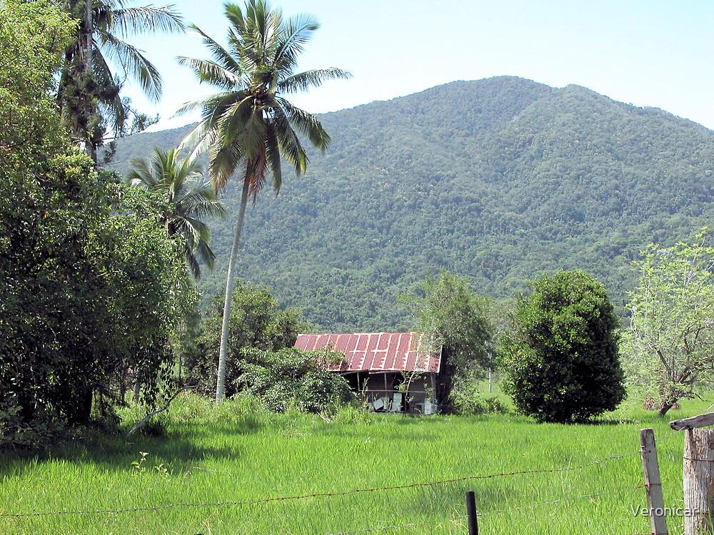 'Old Farm House' by Veronicar