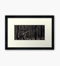 Bushfires 4 Framed Print