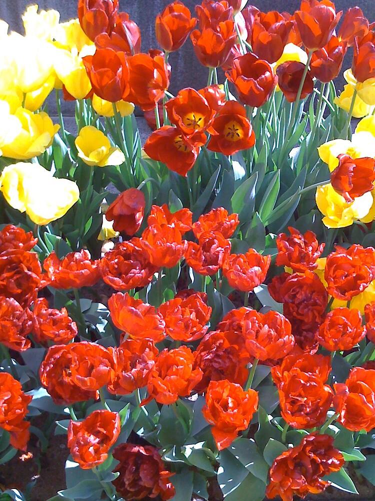Spring Bulbs by Gabriella Clare Marino