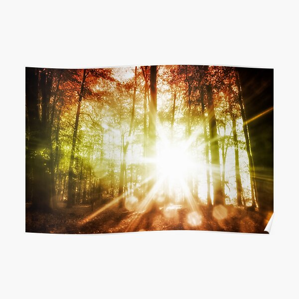 Woodland Sunburst Poster