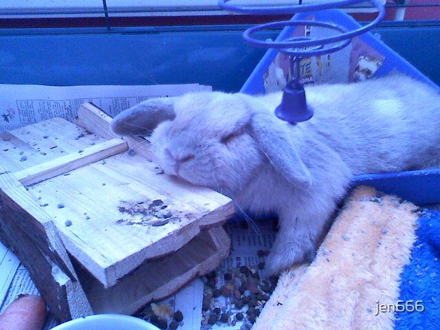 lazy rabbit by jen666
