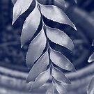 Silvery Blue Leaf by Nicholas de Boos