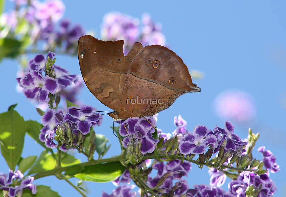Leaf wing by robmac