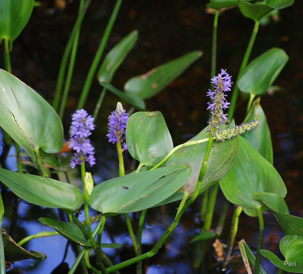 Pretty in Purple by Peri
