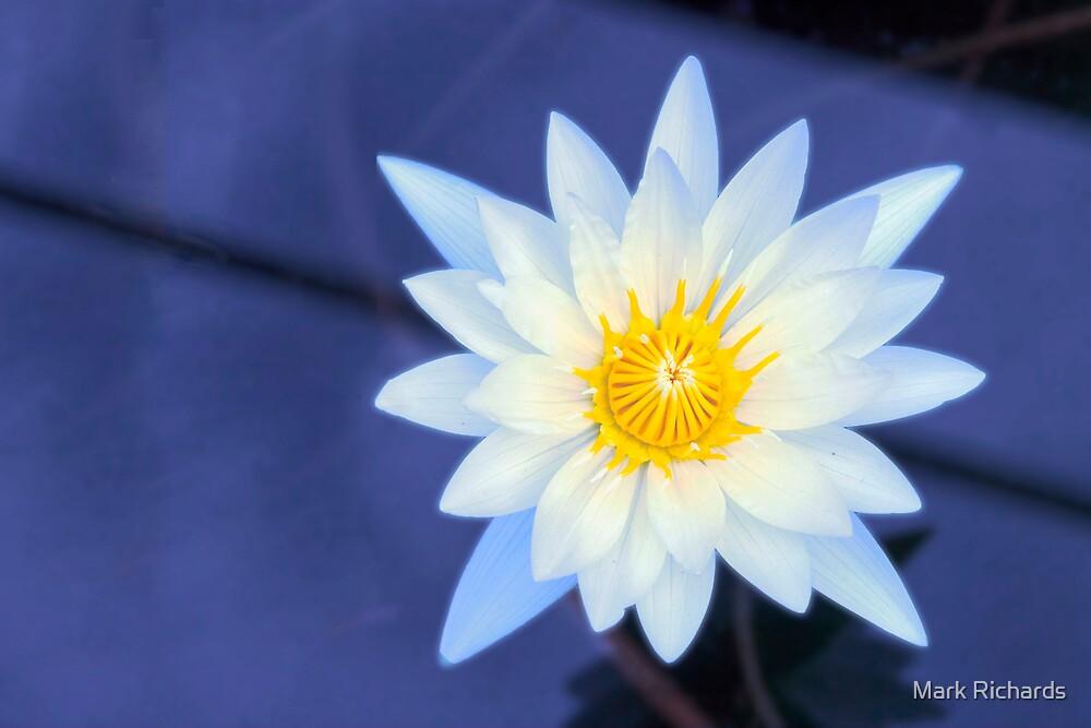 Tranquility - Sydney Royal Botanic Gardens, NSW by Mark Richards