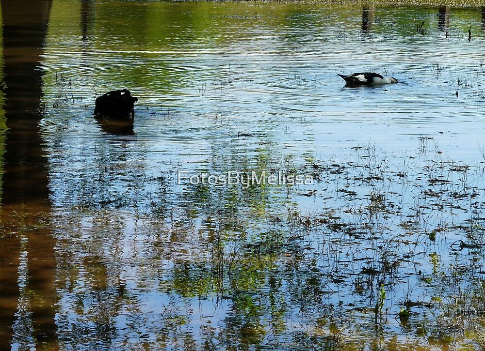Afternoon Swim by FotosByMelissa