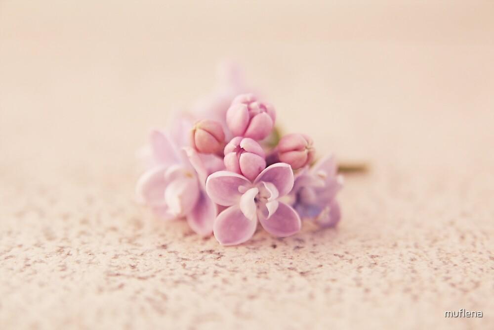 Lilac Magic by muflena