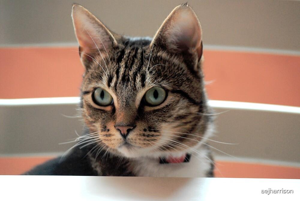 Cat by aejharrison