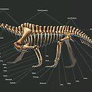 Shringasaurus Indicus Skeleton Study by Thedragonofdoom