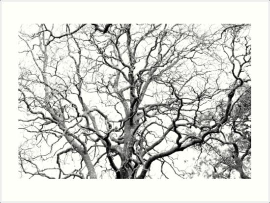 Tree branches by Gaspar Avila