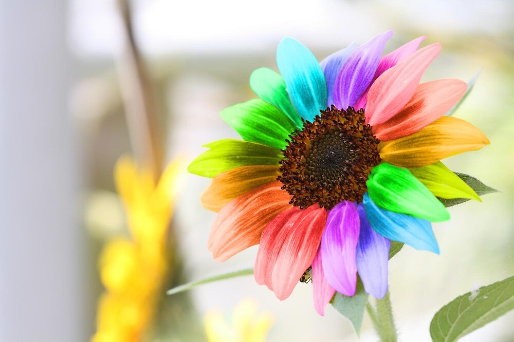 Rainbow Sunflower by WDaRos714