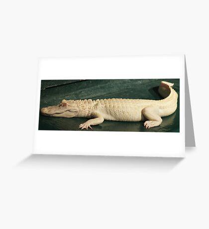 Albino Gator Greeting Card