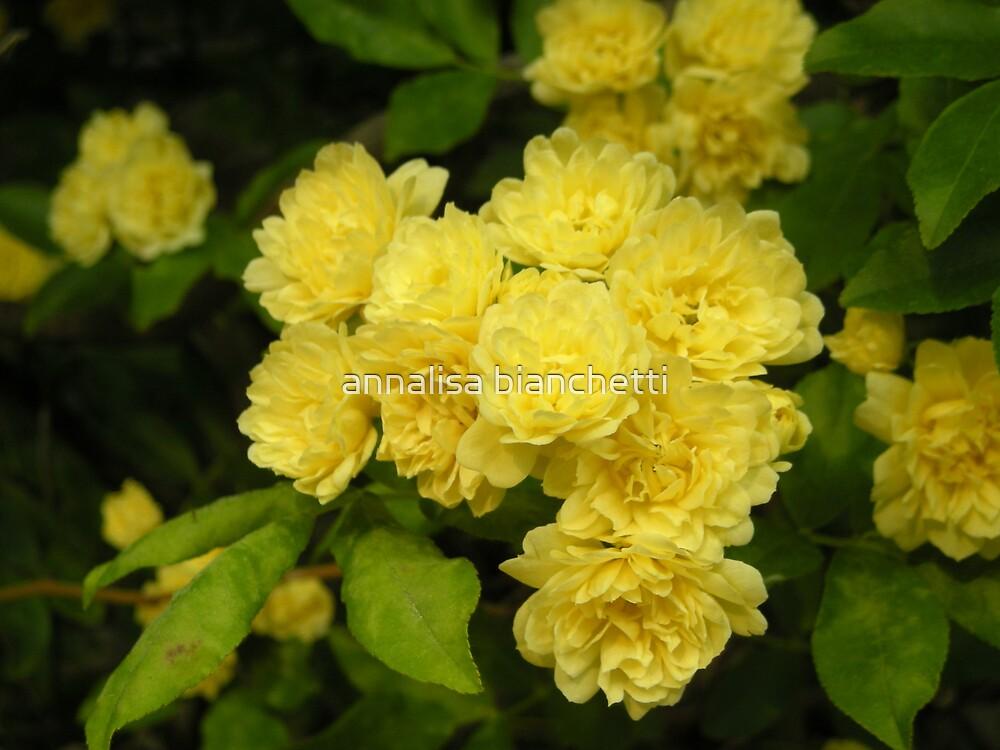 Flowers in yellow by annalisa bianchetti