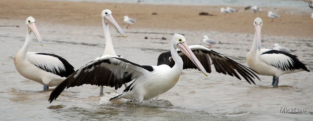 Pelican stretching with onlookers by MickDee