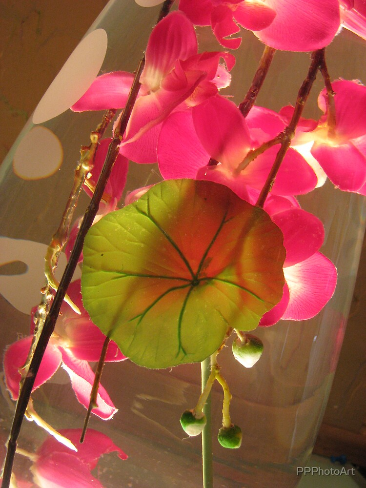 Backlit Orchids by PPPhotoArt