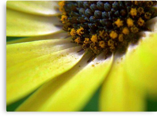 PollenFlower by Charlotte Harold