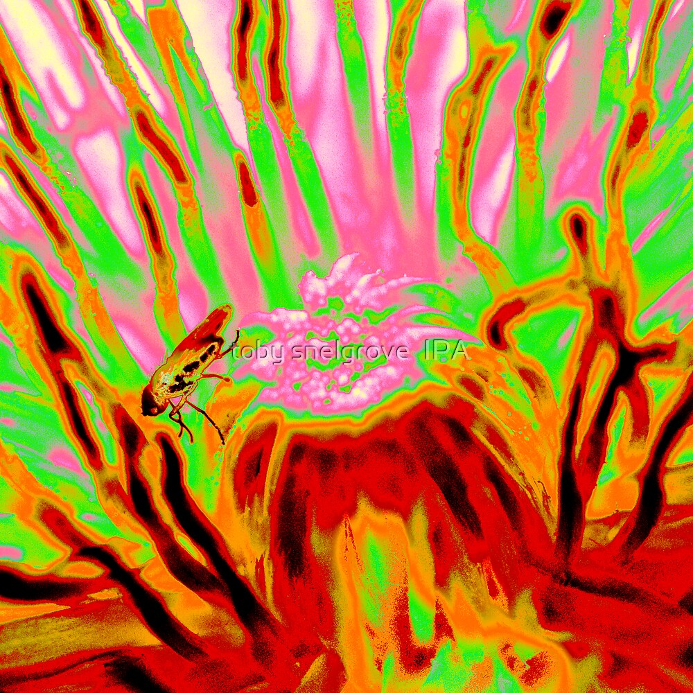 Psychedelic Bug by toby snelgrove  IPA