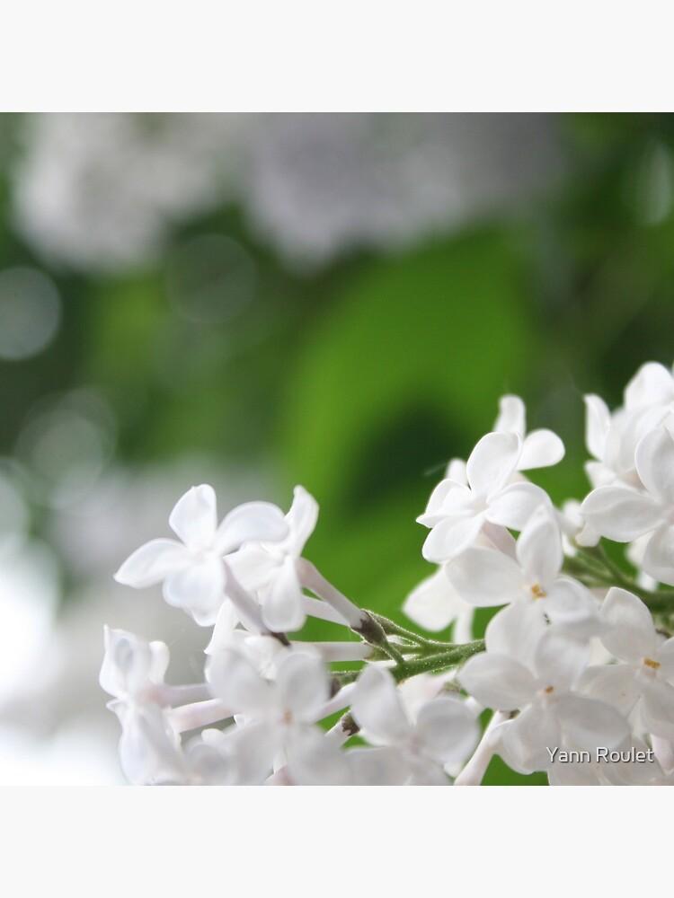 Spring by fan2zik