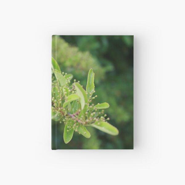 Hatching Hardcover Journal