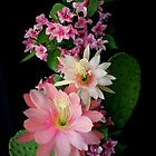 Cacti, Pink And Paler by Michael May