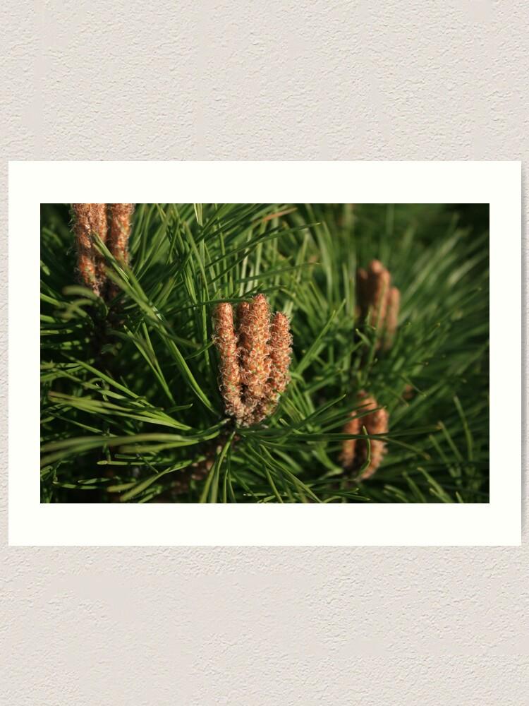 Alternate view of Pine Art Print
