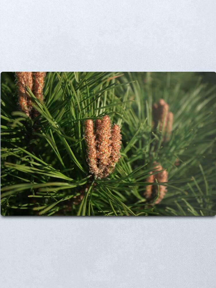 Alternate view of Pine Metal Print