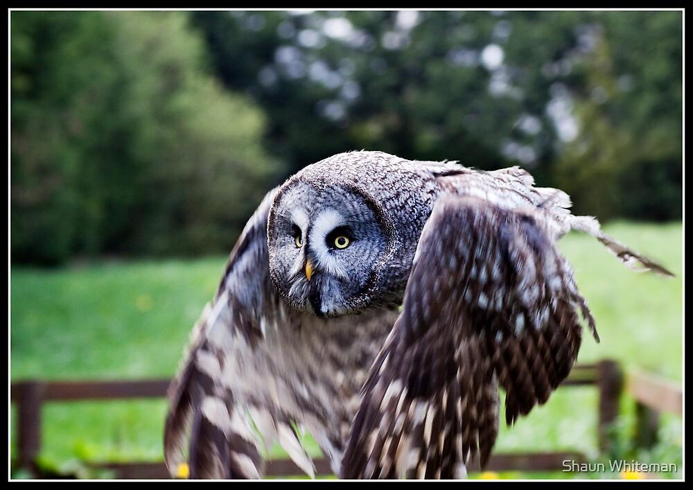 Shaggy in flight by Shaun Whiteman