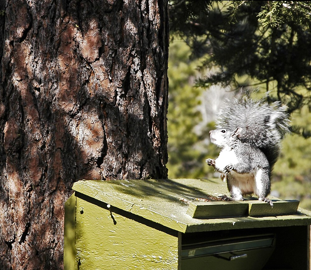 Jenny Squirrel sings Praise the Lord and Thank you for the peanuts. by Edward Henzi