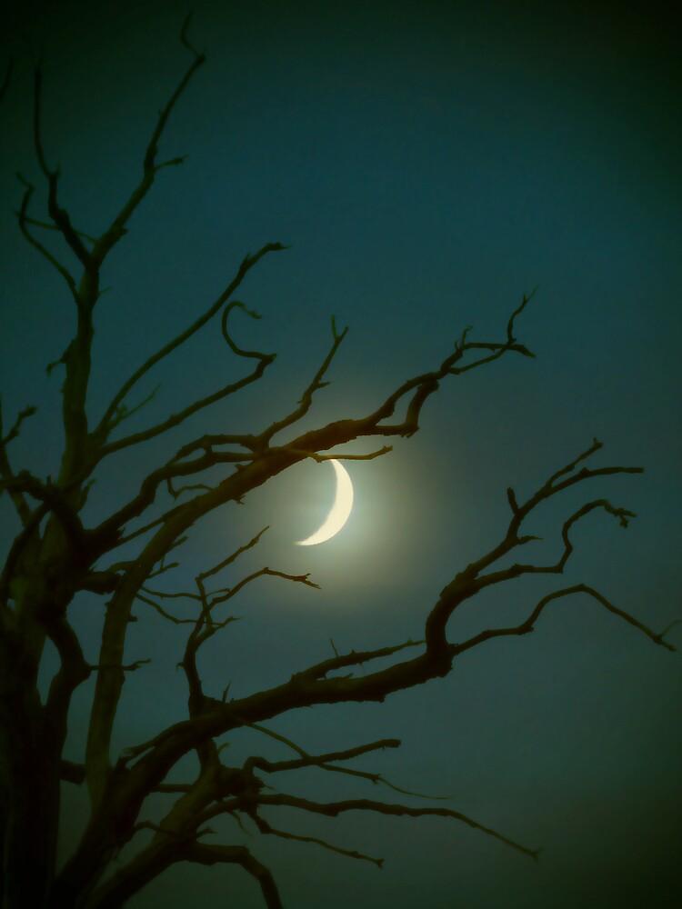 Twilight song by Katarina Kuhar