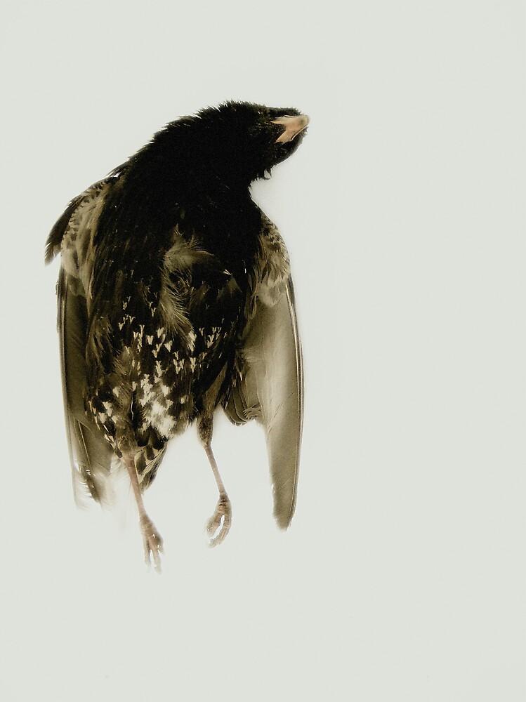 a bird in eden by sarah e. melville