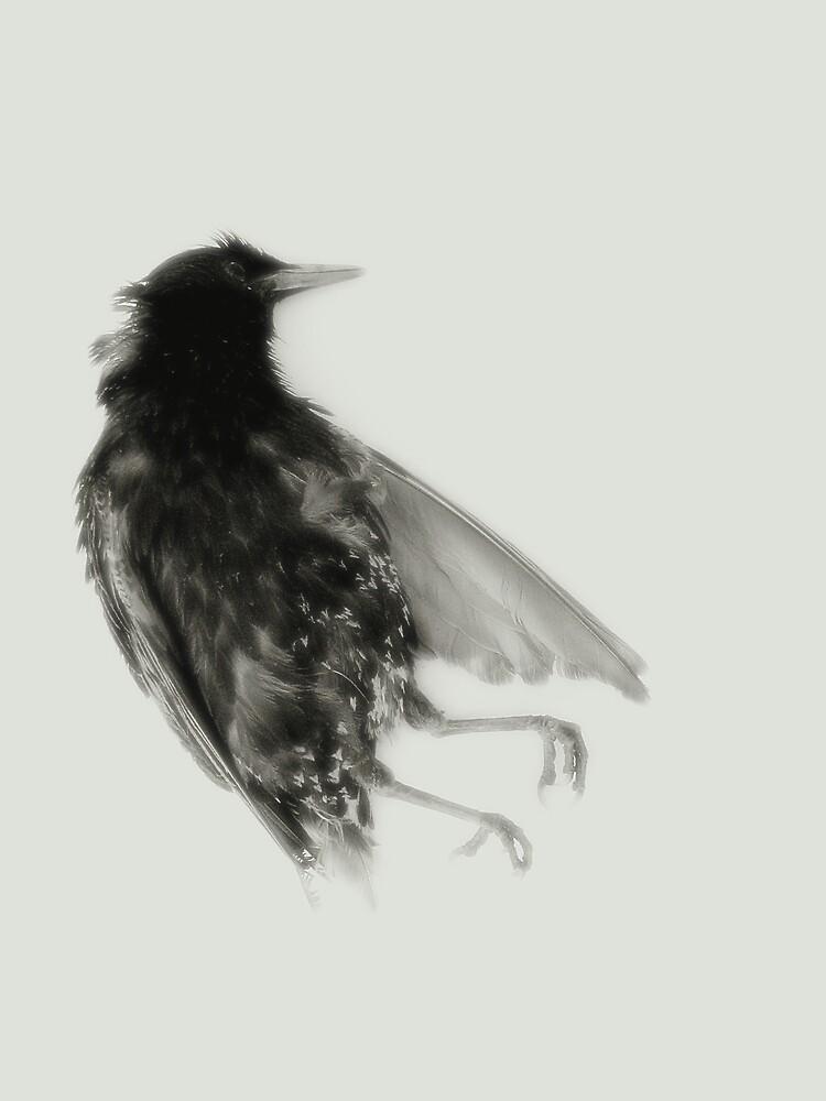 a bird in eden II by sarah e. melville