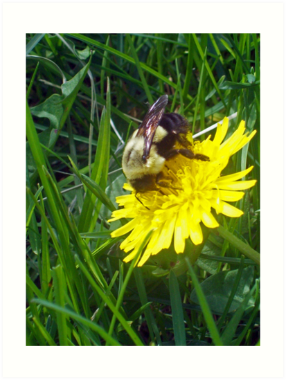 BEE ON A DANDY  by Michelle BarlondSmith