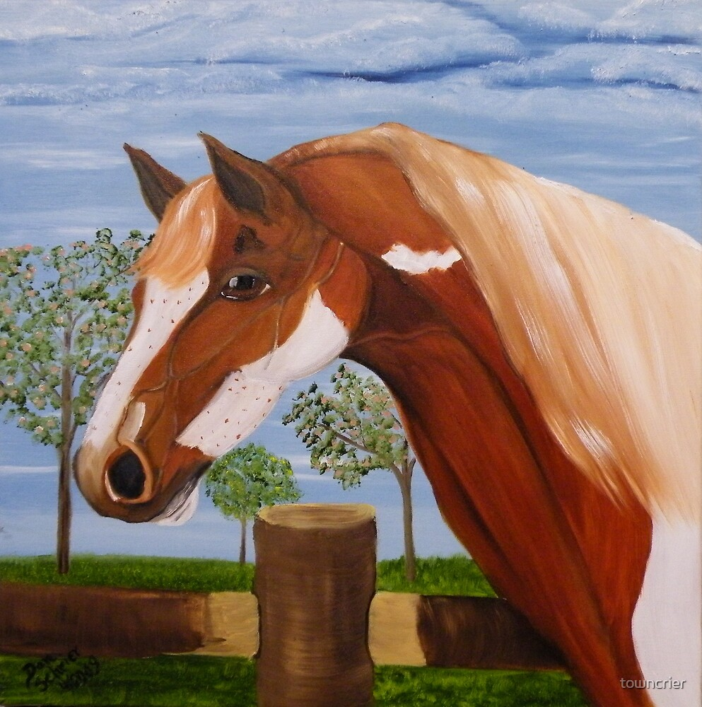 Freckles the Paint by towncrier