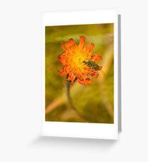 Flower & Mating Insects Greeting Card