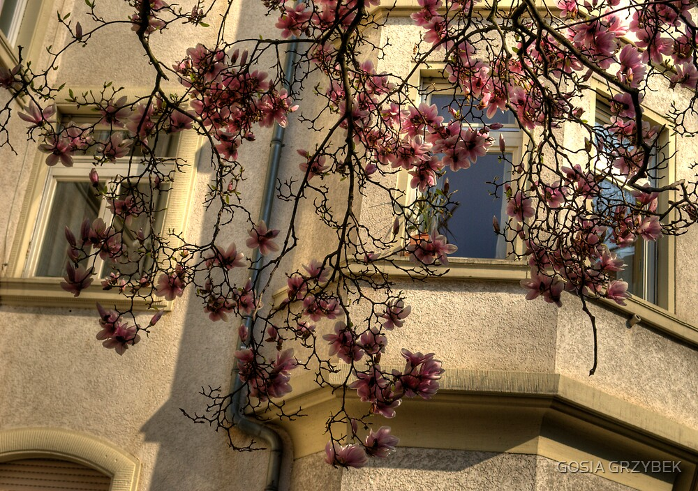 Spring in the city by GOSIA GRZYBEK