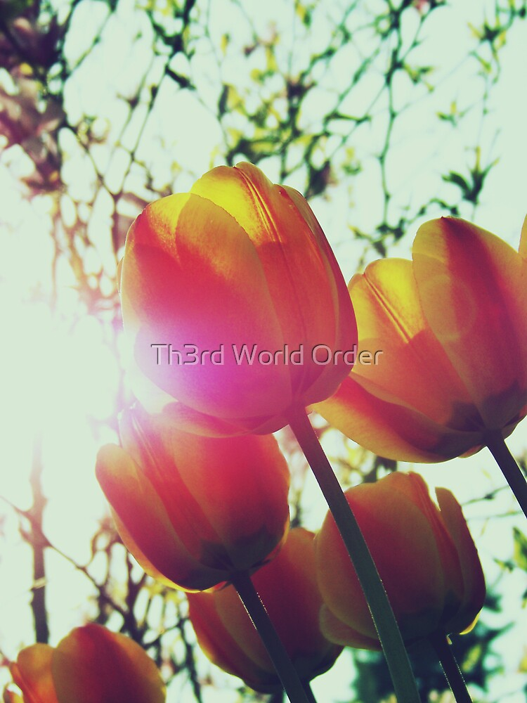 My day in the sun by Th3rd World Order