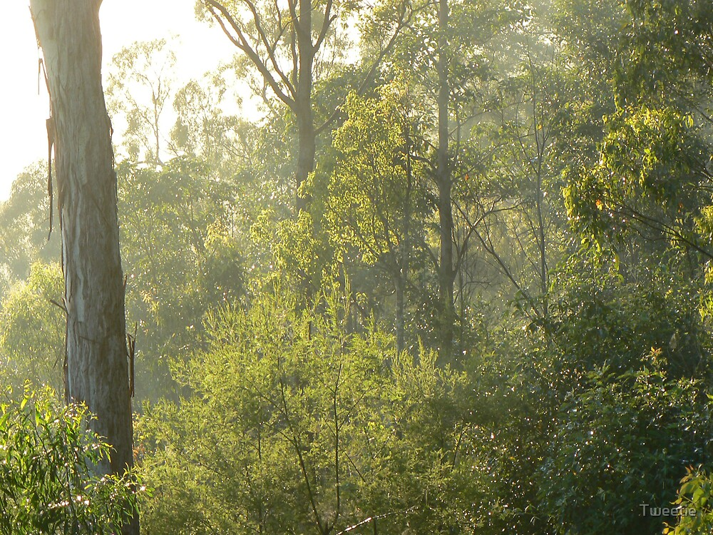 Brisbane Forest Park in the morning light by Tweetie