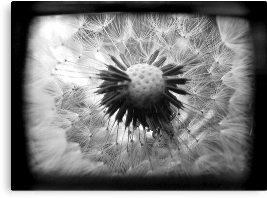 On the Inside - TTV by Kitsmumma