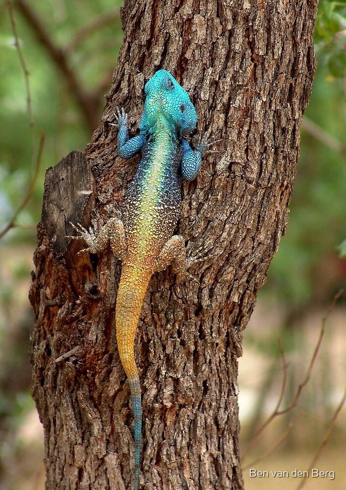 Colourful Lizard - (koggelmander) by Ben van den Berg