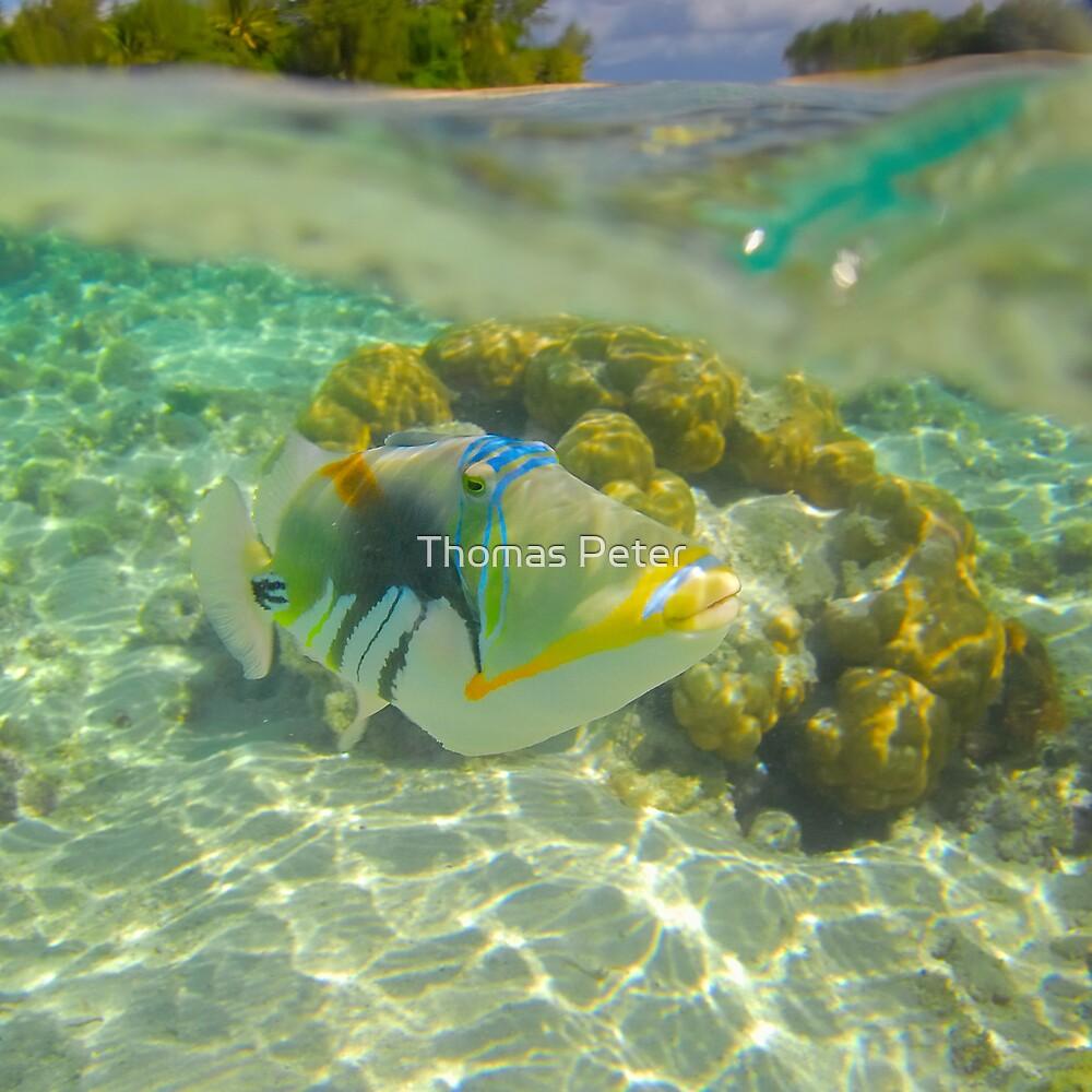 Trigger Fish by Thomas Peter