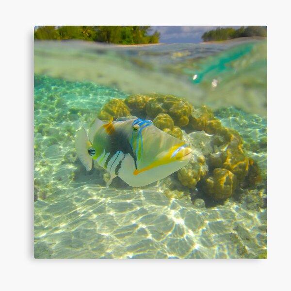Trigger Fish Canvas Print