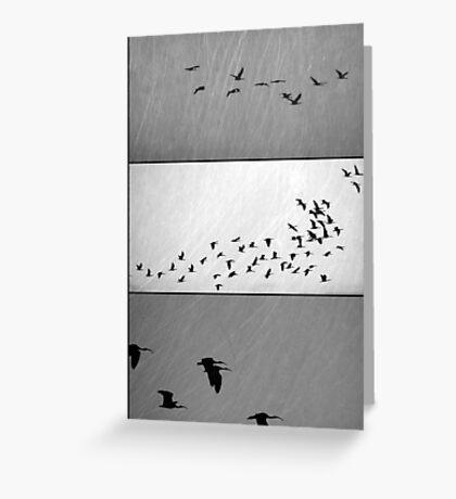 Ibis - Triptych Greeting Card