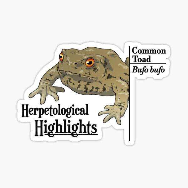 Bufo bufo - Common toad | Alternative Sticker