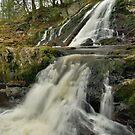 Dead Creek Falls - Vertical by Stephen Beattie